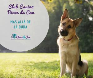 Bicos club