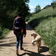 Perros de casa con jardín – Mejorar su bienestar